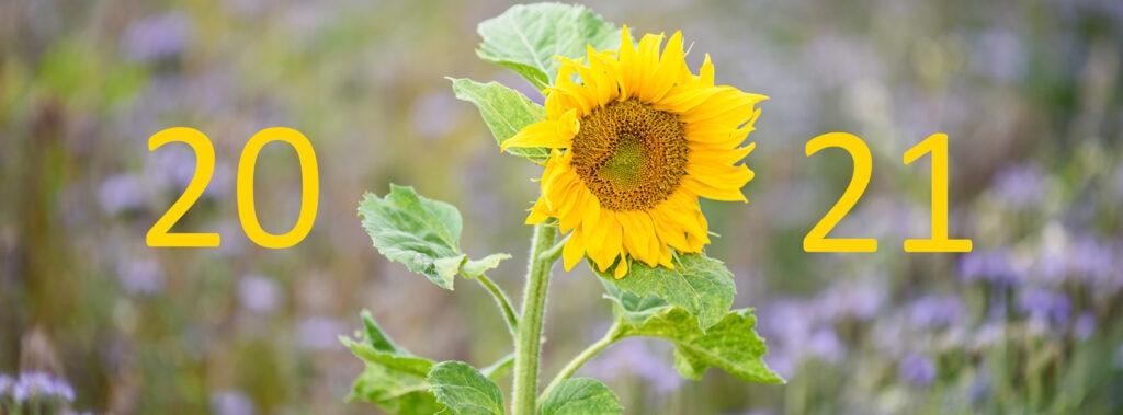 Foto einer Sonnenblume mit Jahreszahl